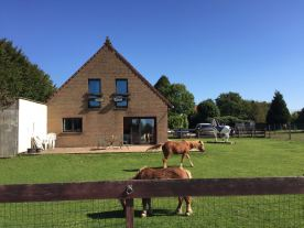 Les poneys dans le jardin
